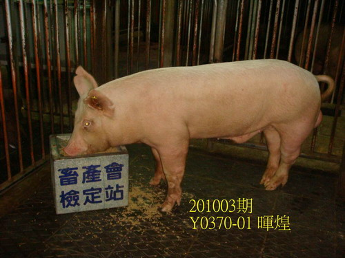 中央畜產會201003期Y0370-01拍賣照片