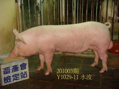 中央畜產會201003期Y1029-11拍賣照片
