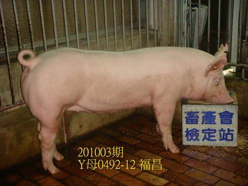 中央畜產會201003期Y0492-12拍賣照片