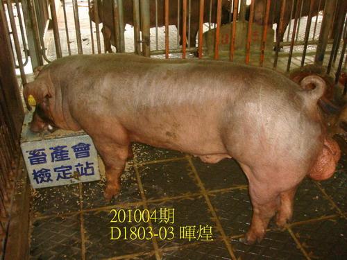 中央畜產會201004期D1803-03拍賣照片