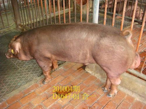 中央畜產會201004期D1647-01拍賣照片