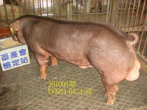 中央畜產會201004期D0954-04拍賣照片