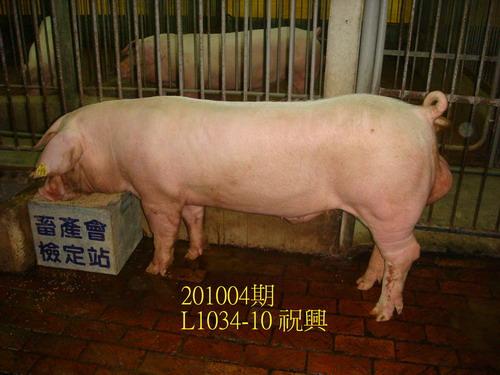 中央畜產會201004期L1034-10拍賣照片