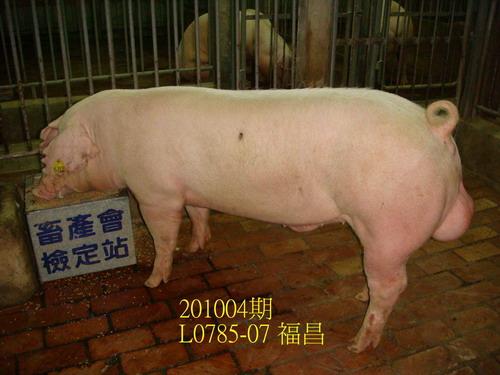 中央畜產會201004期L0785-07拍賣照片