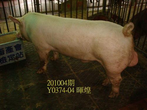 中央畜產會201004期Y0374-04拍賣照片