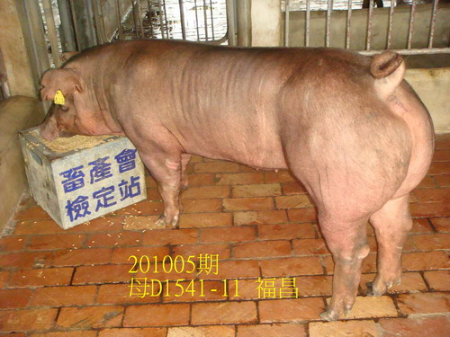 中央畜產會201005期D1541-11拍賣照片