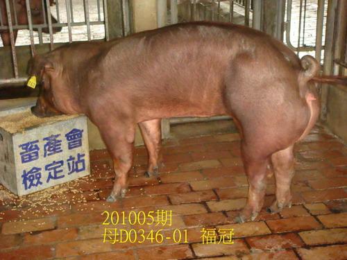 中央畜產會201005期D0346-01拍賣照片