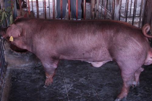 中央畜產會201005期D0920-04體型-全身相片