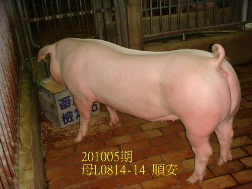 中央畜產會201005期L0814-14拍賣照片