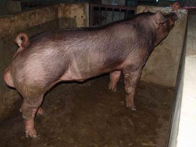 台灣動物科技研究所竹南檢定站9905期D1695-03拍賣相片