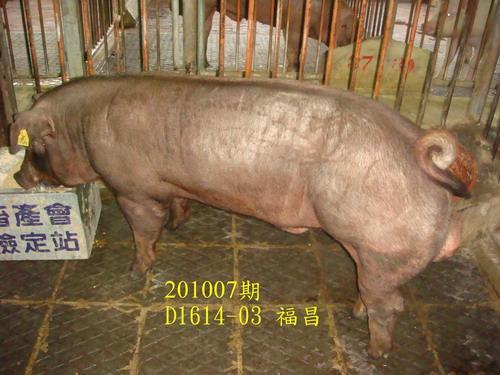 中央畜產會201007期D1614-03拍賣照片