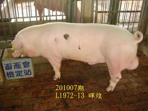 中央畜產會201007期L1972-13拍賣照片