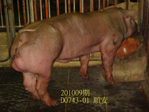中央畜產會201009期D0743-01拍賣照片