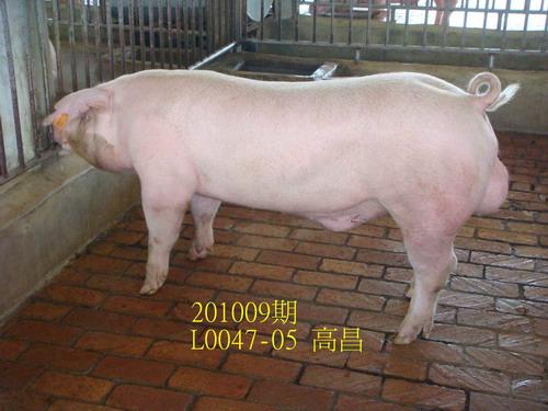 中央畜產會201009期L0047-05拍賣照片