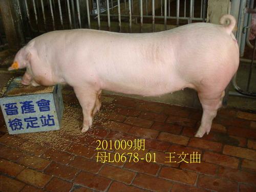中央畜產會201009期L0678-01拍賣照片
