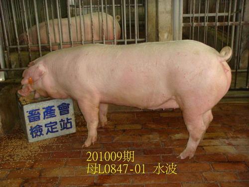 中央畜產會201009期L0847-01拍賣照片