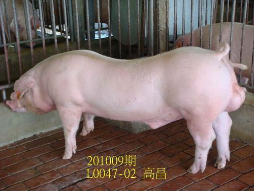 中央畜產會201009期L0047-02拍賣照片