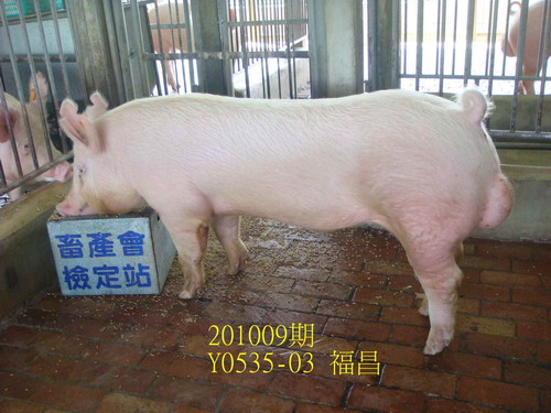 中央畜產會201009期Y0535-03拍賣照片