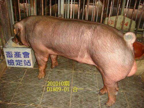 中央畜產會201010期D1809-01拍賣照片