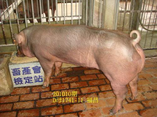 中央畜產會201010期D1741-11拍賣照片