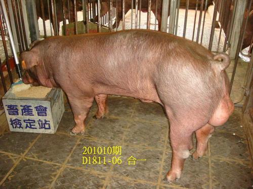 中央畜產會201010期D1811-06拍賣照片