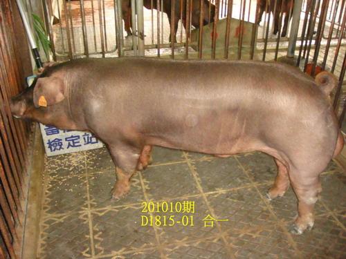 中央畜產會201010期D1815-01拍賣照片
