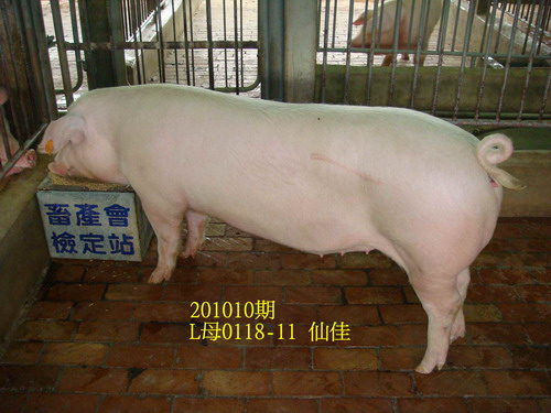 中央畜產會201010期L0118-11拍賣照片