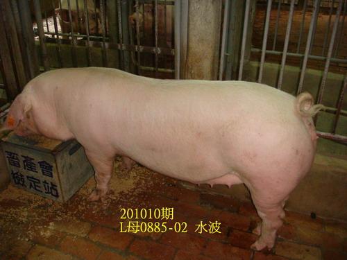 中央畜產會201010期L0885-02拍賣照片