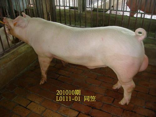 中央畜產會201010期L0111-01拍賣照片