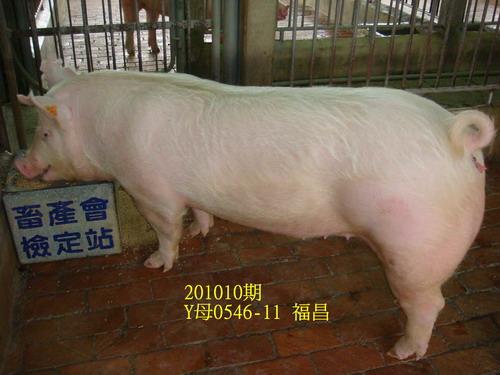 中央畜產會201010期Y0546-11拍賣照片