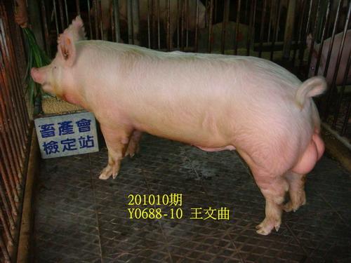 中央畜產會201010期Y0688-10拍賣照片