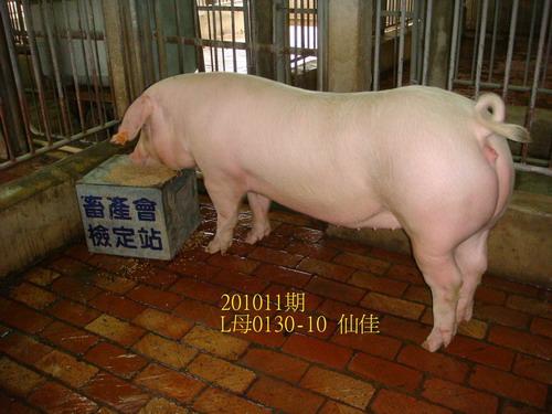 中央畜產會201011期L0130-10拍賣照片