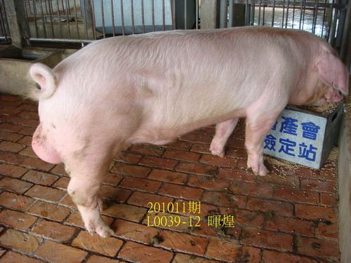 中央畜產會201011期L0039-12拍賣照片