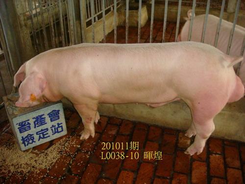 中央畜產會201011期L0038-10拍賣照片