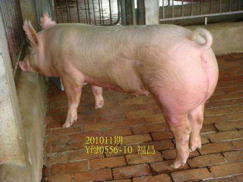 中央畜產會201011期Y0556-10拍賣照片