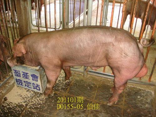 中央畜產會201101期D0155-05拍賣照片