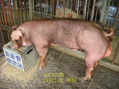 中央畜產會201101期D1952-01拍賣照片