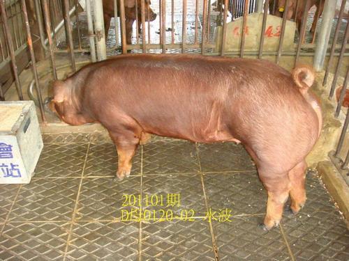 中央畜產會201101期D0120-02拍賣照片