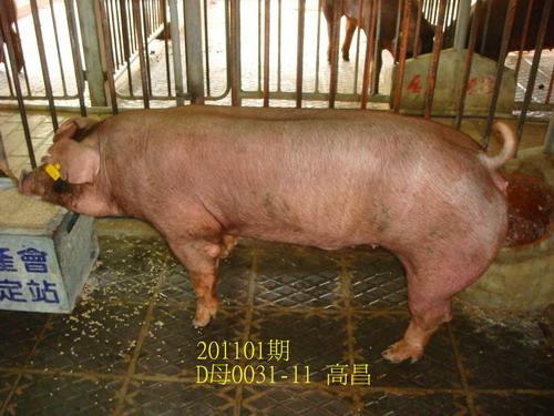 中央畜產會201101期D0031-11拍賣照片