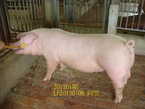 中央畜產會201101期L0130-06拍賣照片