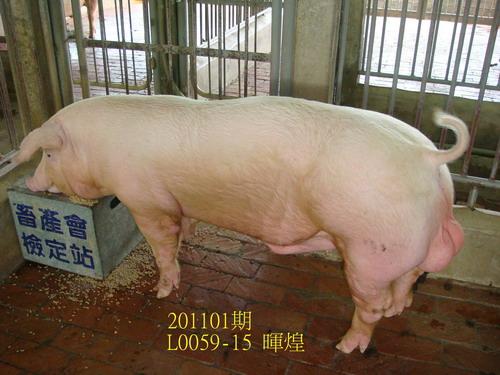 中央畜產會201101期L0059-15拍賣照片