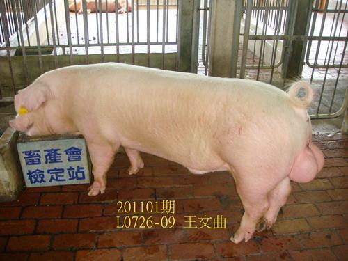 中央畜產會201101期L0726-09拍賣照片