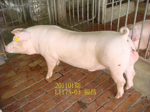 中央畜產會201101期L1173-03拍賣照片