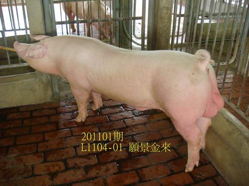 中央畜產會201101期L1104-01拍賣照片