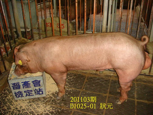 中央畜產會201103期D1025-01拍賣照片