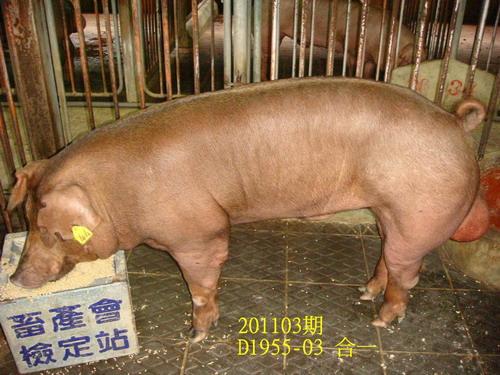 中央畜產會201103期D1955-03拍賣照片