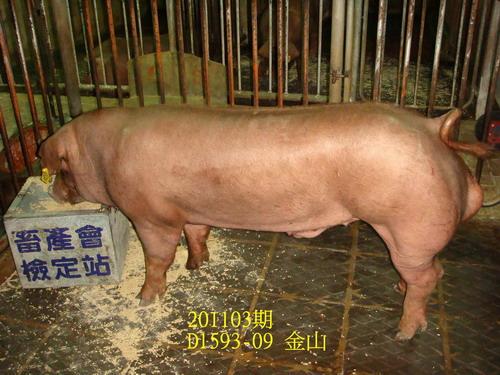 中央畜產會201103期D1593-09拍賣照片