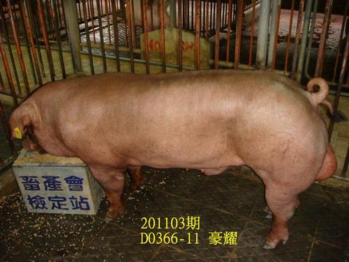 中央畜產會201103期D0366-11拍賣照片