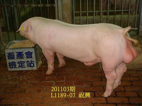 中央畜產會201103期L1189-07拍賣照片