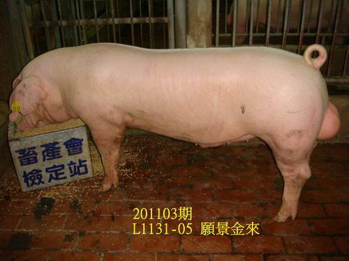 中央畜產會201103期L1131-05拍賣照片